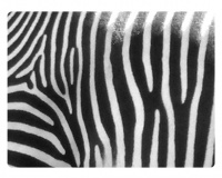 Sticky 'N Grippy Zebra Skin Screen Cleaner